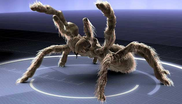 http://contentlibrary.digiturk.com.tr/Program/12871/Image/H-monsterquest-monster-spiders-630.jpg
